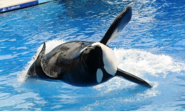 messed-up-things-actually-happened-sea-world