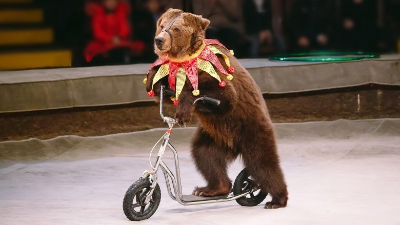 bear bicycle scooter