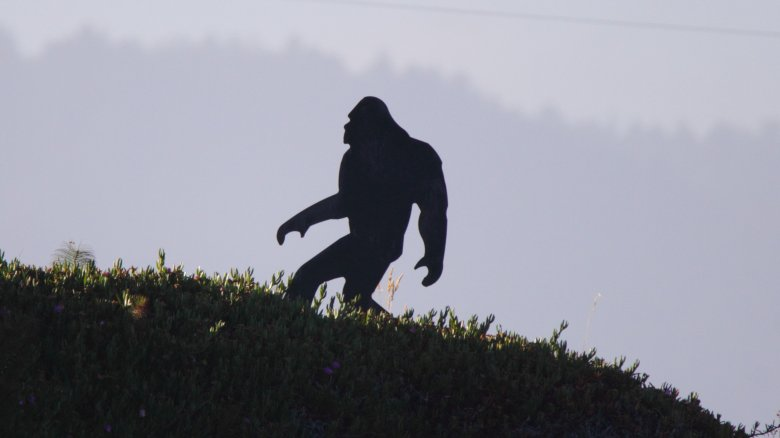 bigfoot sasquatch