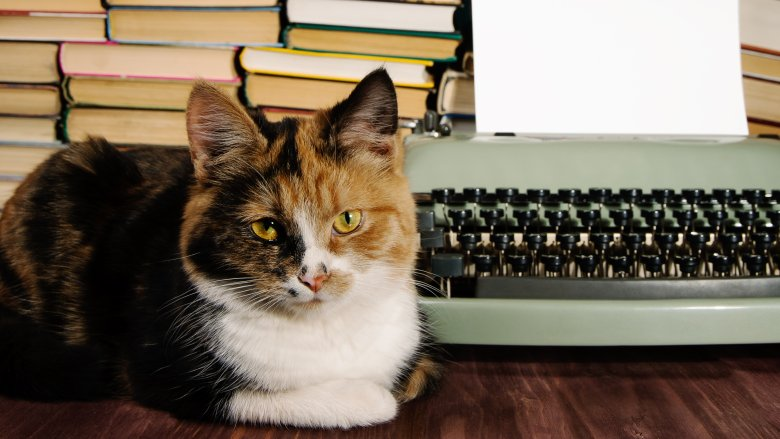 Cat with a typewriter
