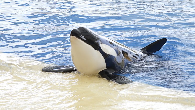 Messed up things that happened at SeaWorld