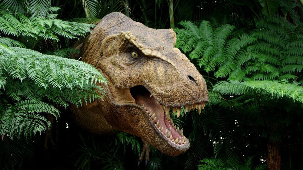 Scientists Collect Dinosaur DNA From Fossilized Skull