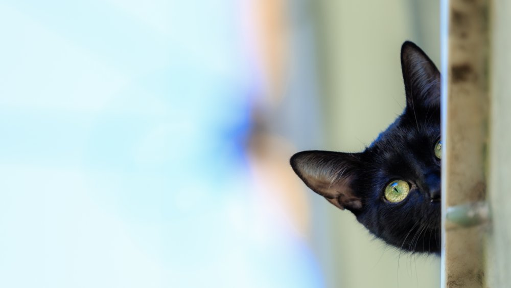 The real reason your cat won't stop staring at you