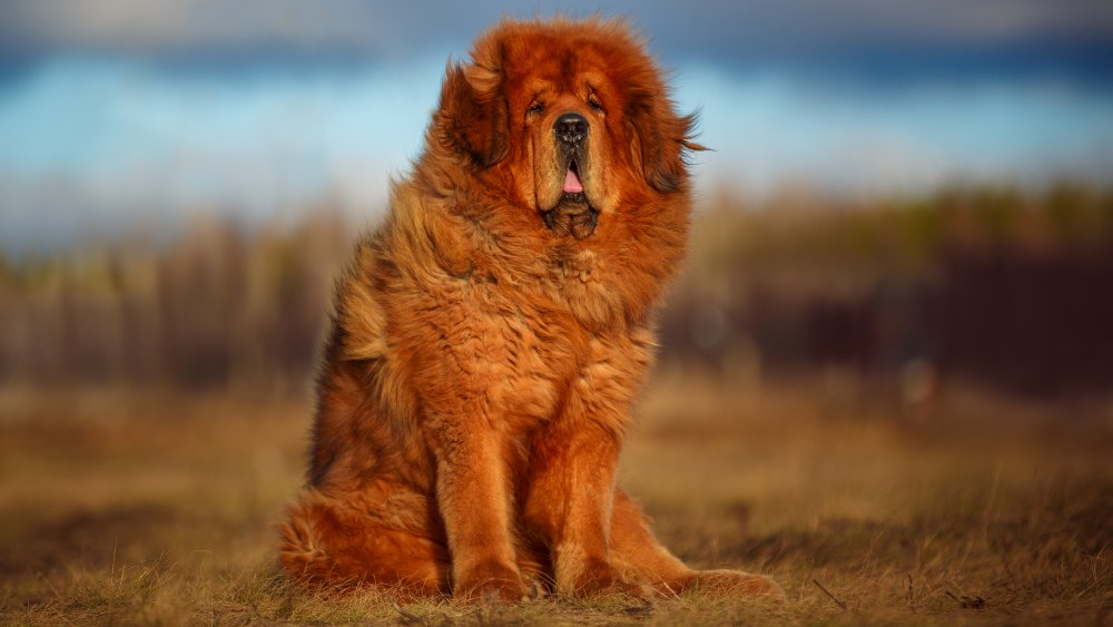 The Strongest Dog Breed In The World