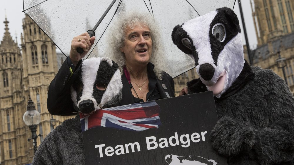 Brian May poses with people dressed as badgers to protest culling in 2016